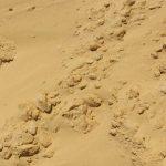 Песок Ставропольский